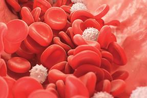 Curso superior de hematología para médicos